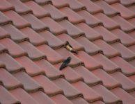 Izolace plochých střech: Víte, jak na ni?