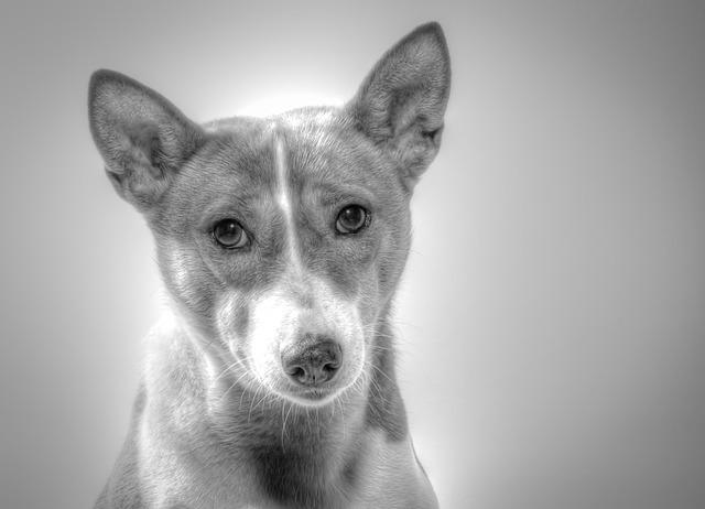 Elektrický ohradník ochrání vašeho psa