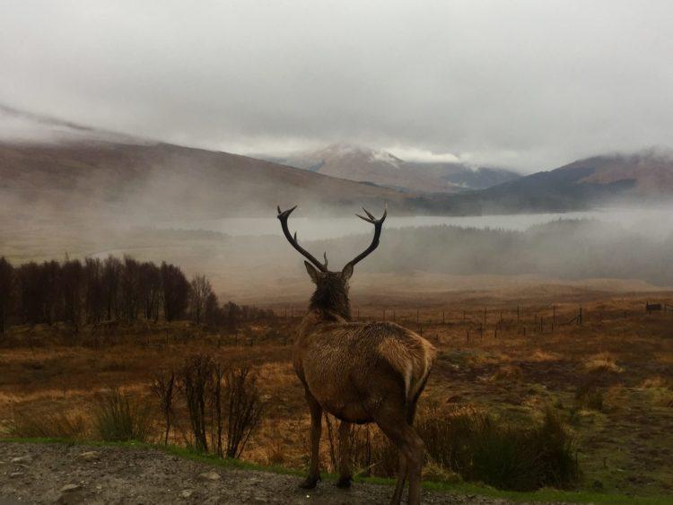jelen, fotopast, příroda