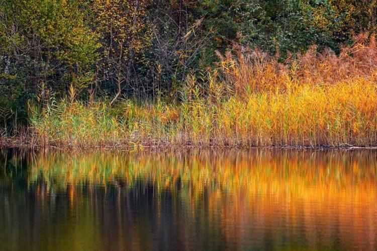 Lake Reeds Bank Reflection  - Tho-Ge / Pixabay